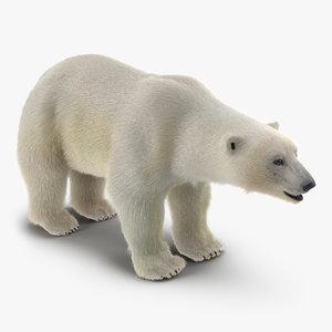 polar bear fur max