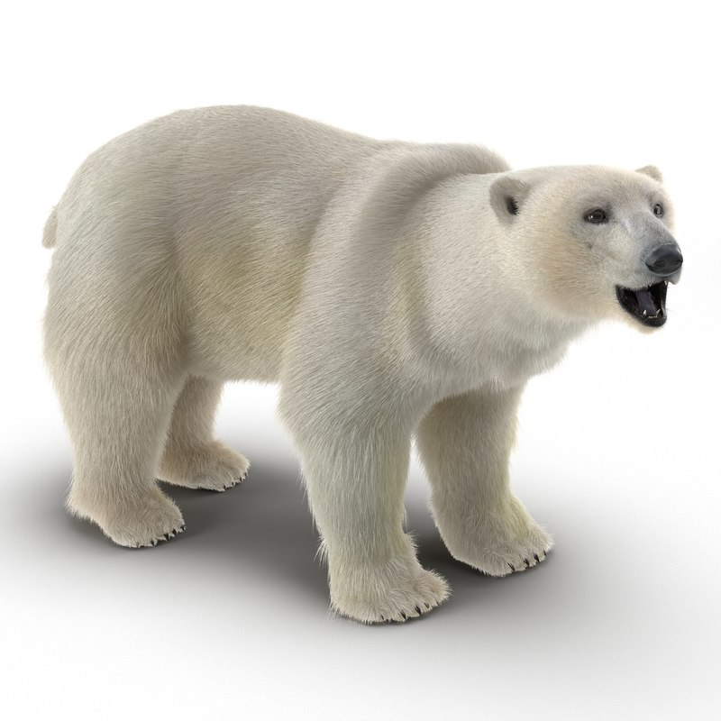 polar bear fur rigged max