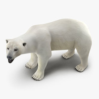 polar bear rigged 3d max