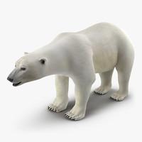 polar bear max