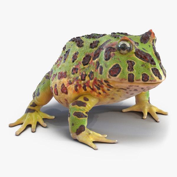 3d pacman frog