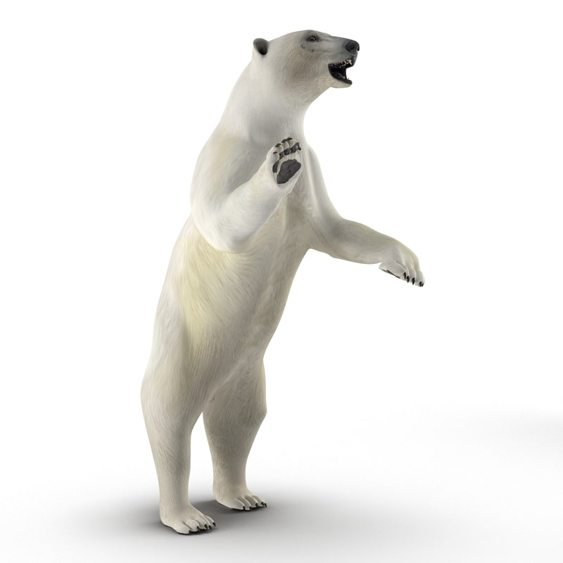 polar bear pose 3 3d model