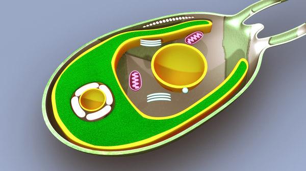 algae structure 3d model