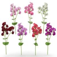 max interior flower plant