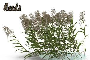 max reeds