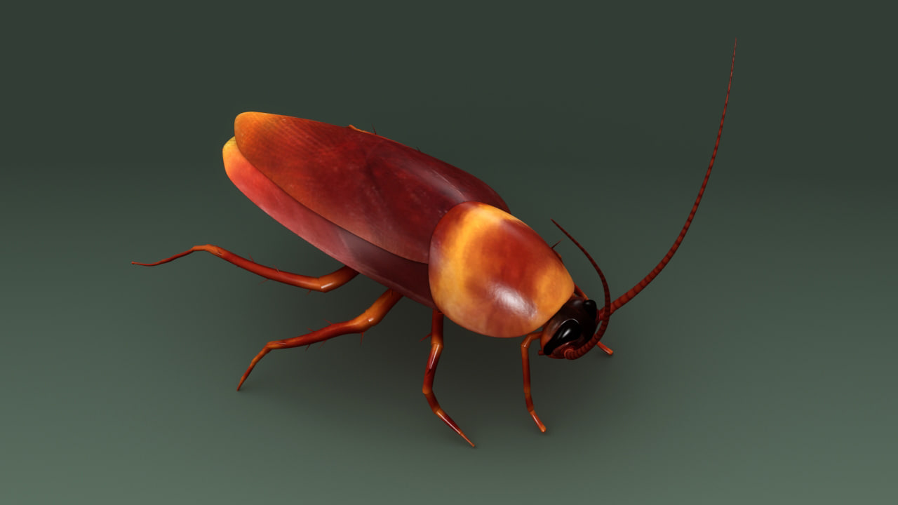 3d model of cockroaches insects pests