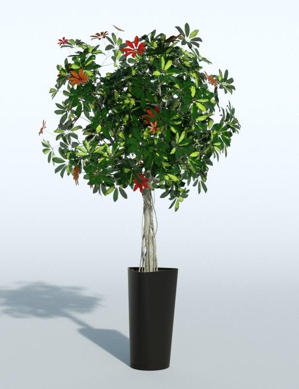 outdoor plant 3d obj