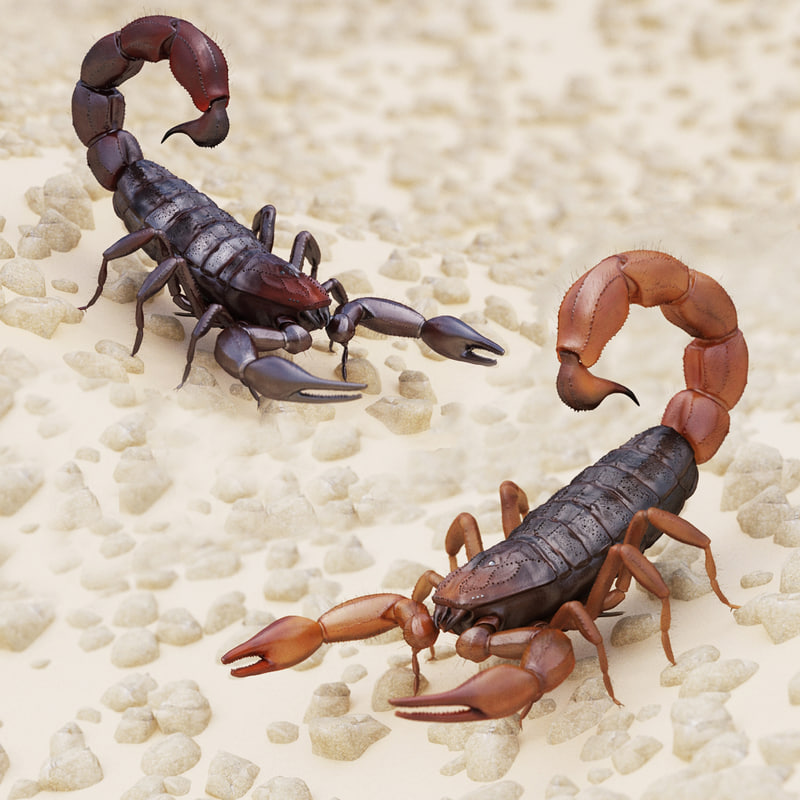 3d model scorpion modeled brown