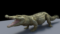 crocodile alligator 3d ma
