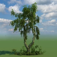 broadleaf tree 3d model
