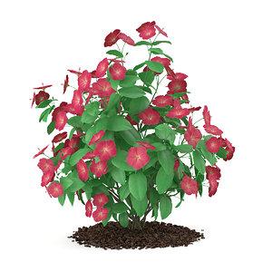 red hibiscus flowers rosa-sinensis 3d max
