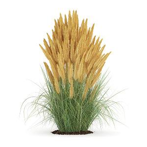 max ornamental grass