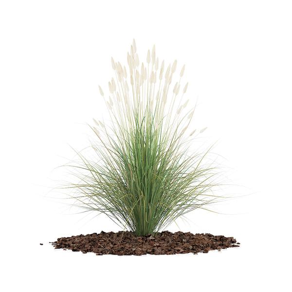ornamental grass obj