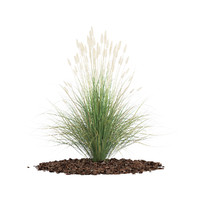 ornamental grass obj