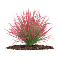3d model ornamental grass
