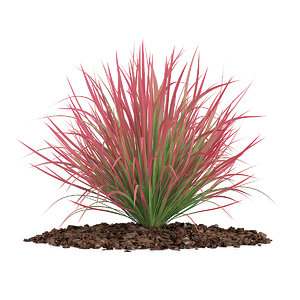 3d model ornamental grass