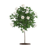 max white rose tree