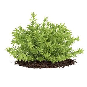 3d sedum plant album leaves