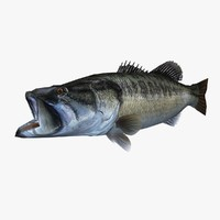 3d large mouth bass model
