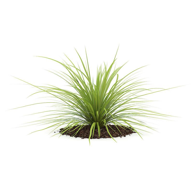 3d model yucca plant baileyi
