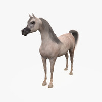 3d model horse arabian grey