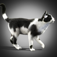 3d model black white cat fur