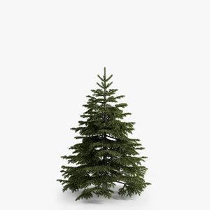 3d fir-tree 02 model