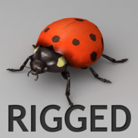3d model rigged ladybug