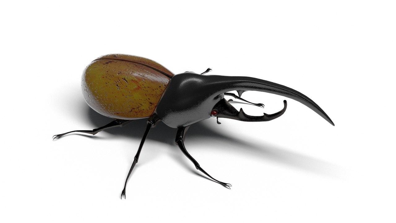 max hercules beetle