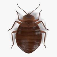 bedbug female 3d model