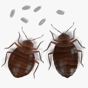 bedbugs cimex lectularius 3d model