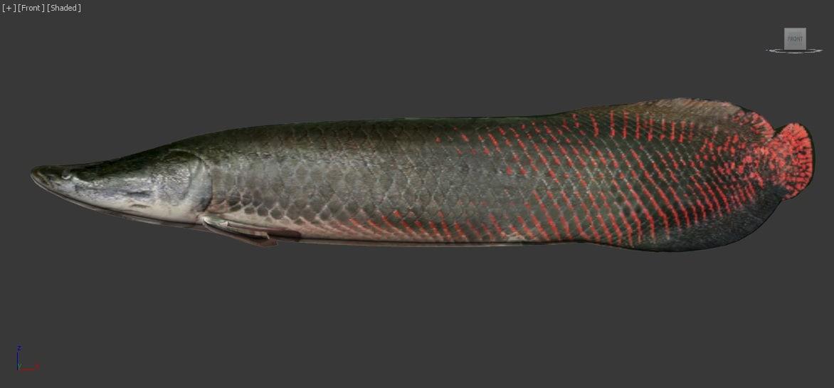 rigged monster fish arapaima 3d model