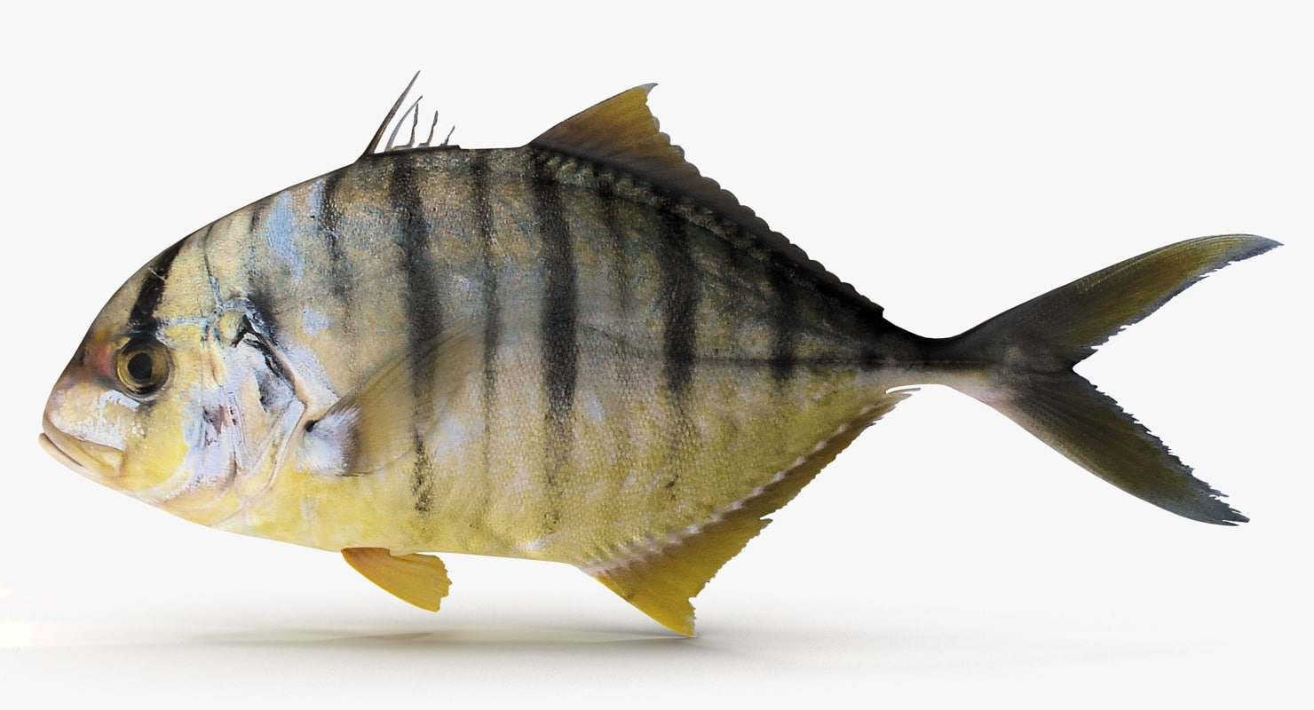 3d model of golden trevally
