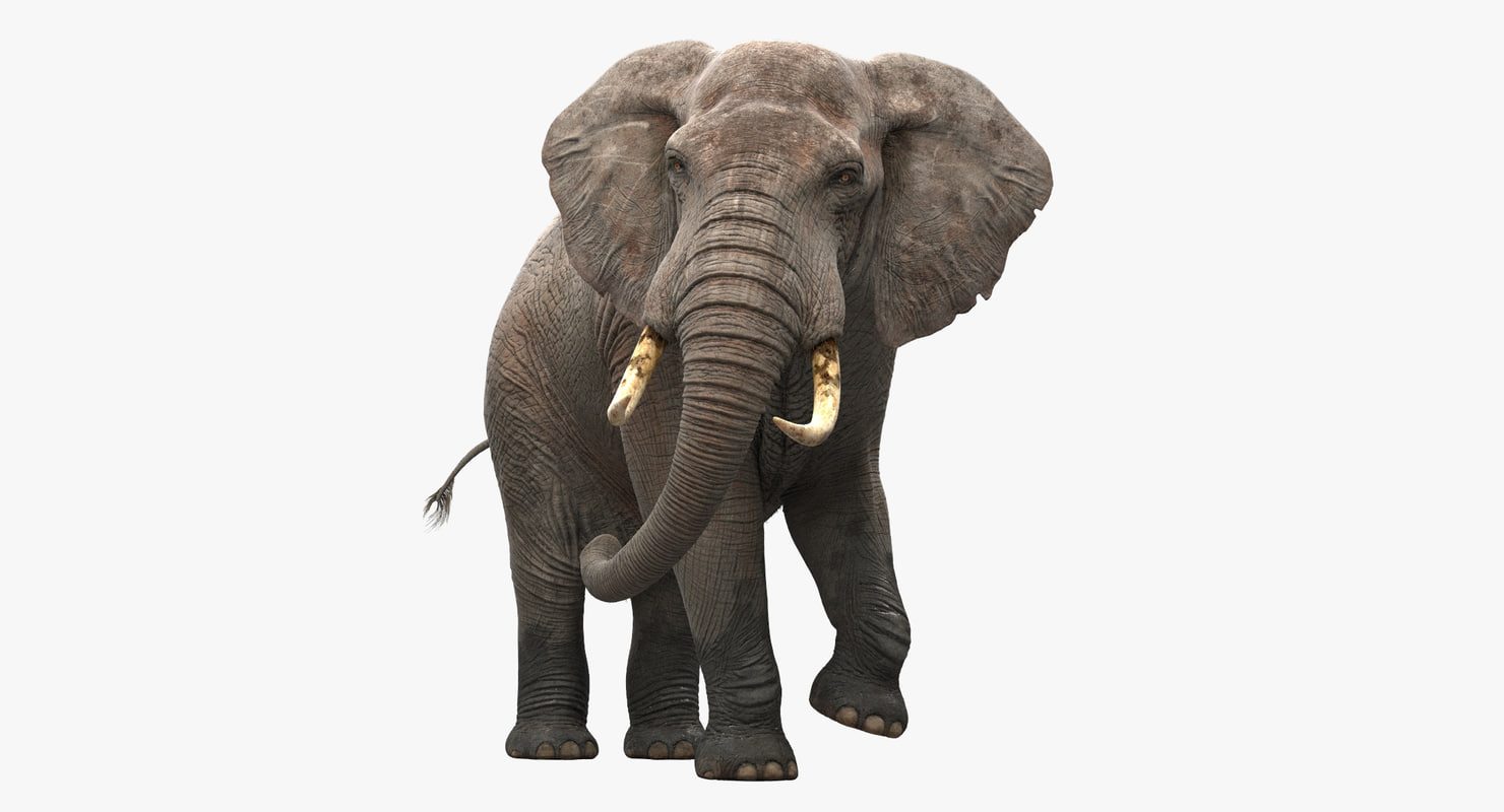 elephant rigged max