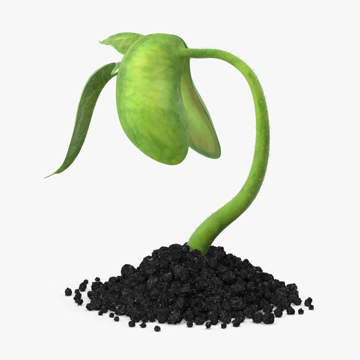 plant sprout 3d model