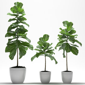 3d fig plant