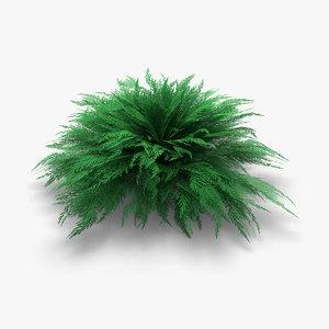 3d juniper juniperus