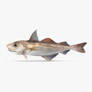 3d haddock model