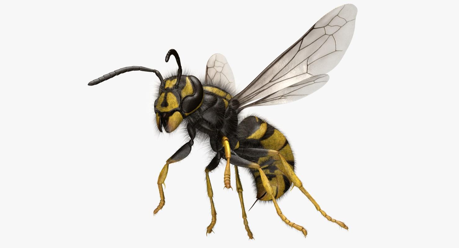 vespula vulgaris common wasp 3d obj