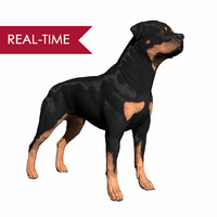 3d rottweiler real-time dog