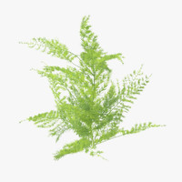 3d ferns 03 02 model