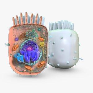 animal cell 1 obj