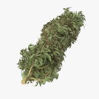 3d marijuana bud 01 model