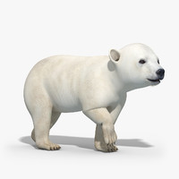 3d polar bear baby rigged model