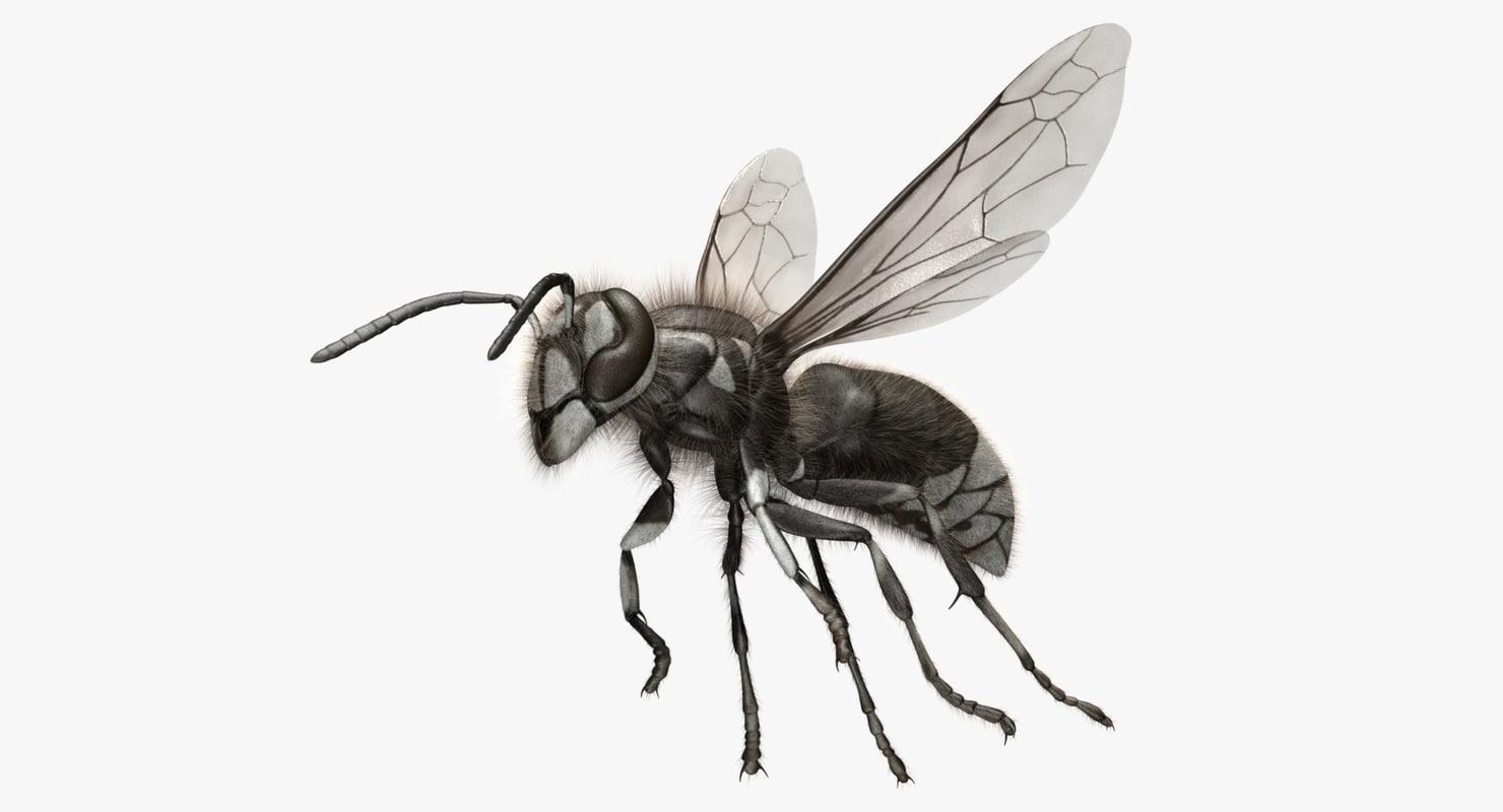 dolichovespula maculata bald-faced hornet obj