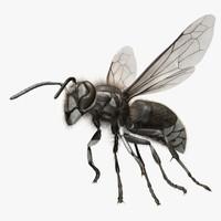 "Dolichovespula Maculata ""Bald-faced Hornet"