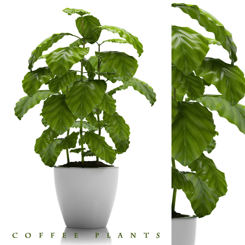 coffee plant pot 3d max