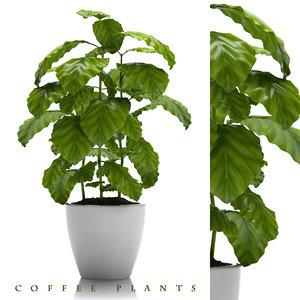 coffee plant pot 3d max