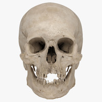 Real Human Skull 3D Scan 02