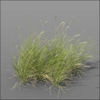 Dune grass2